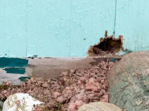 Santa Fe Landscape Pros - NM Rodent Control And Management